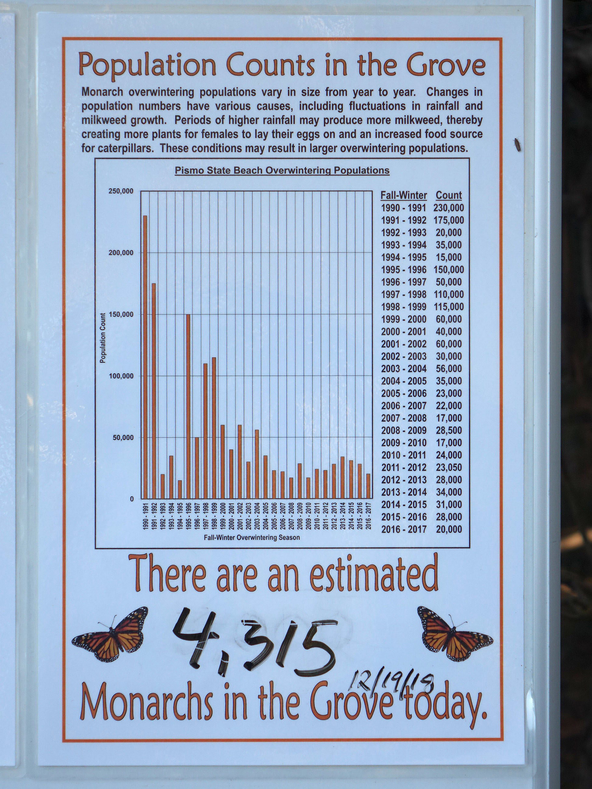 Monarch Butterflies at Pismo State Beach | Edhat