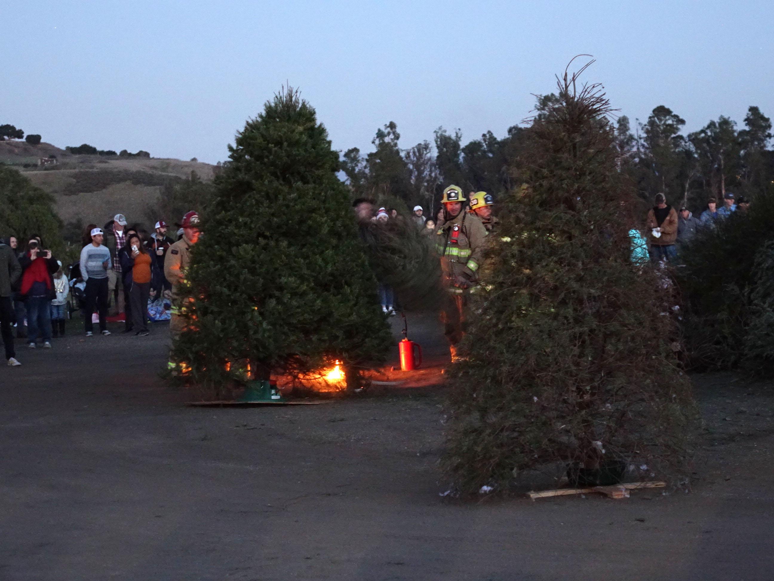 How Often To Water Christmas Tree.Solvang Christmas Tree Burn Edhat
